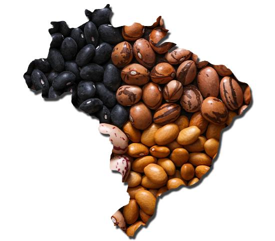 feijão brasil grãos todo o brasil
